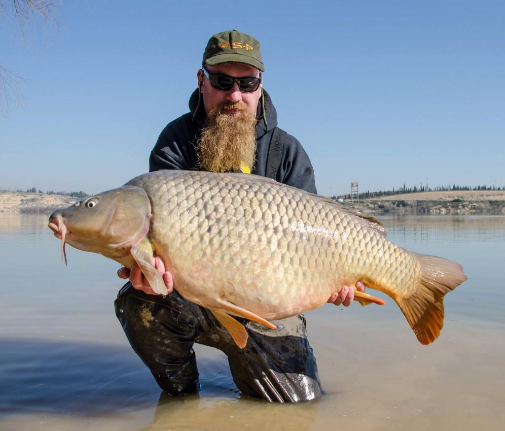 Ebro_carp