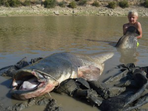 *** 9 years old boy catches a 2,53m long catfish ***